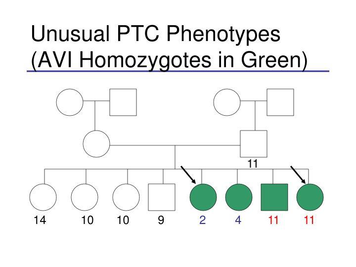 Unusual PTC Phenotypes (AVI Homozygotes in Green)