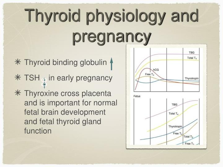 Thyroid physiology and pregnancy