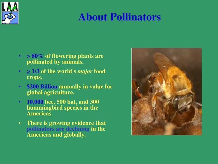 About pollinators