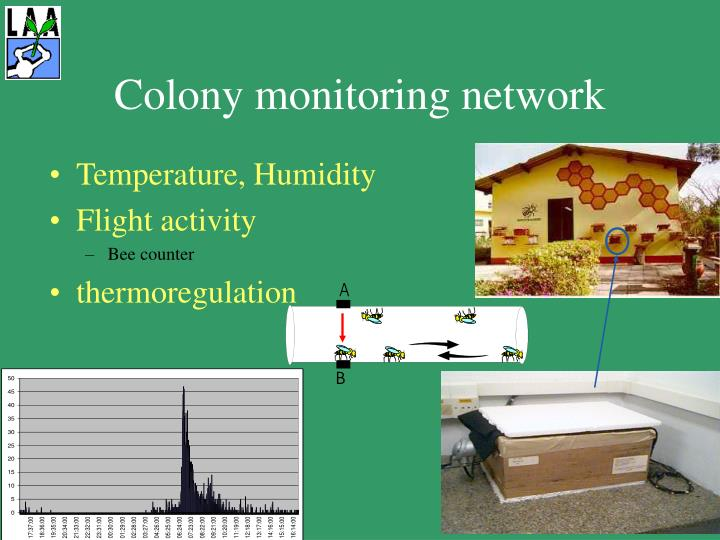 Colony monitoring network