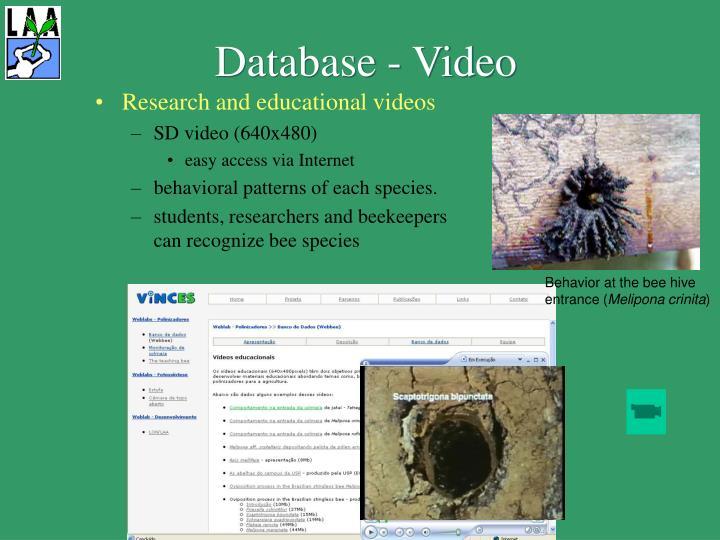 Database - Video