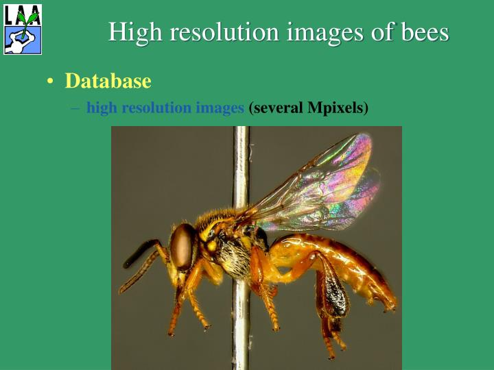 High resolution images of bees