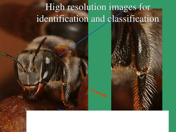 High resolution images for identification and classification