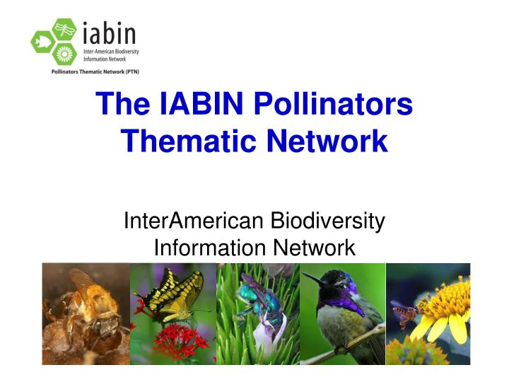 The IABIN Pollinators Thematic Network