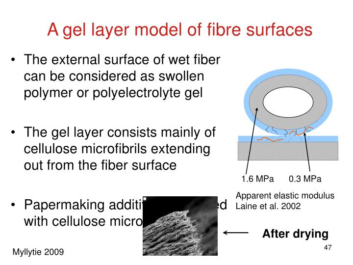 A gel layer model of fibre surfaces