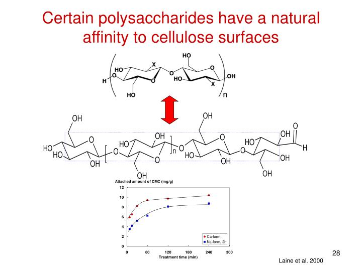 Certain polysaccharides have a natural affinity to cellulose surfaces