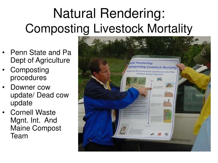 Natural rendering composting livestock mortality