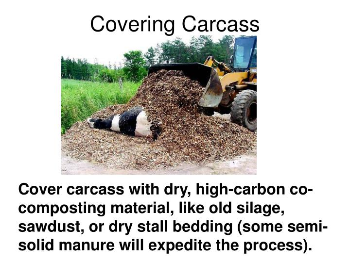 Covering Carcass