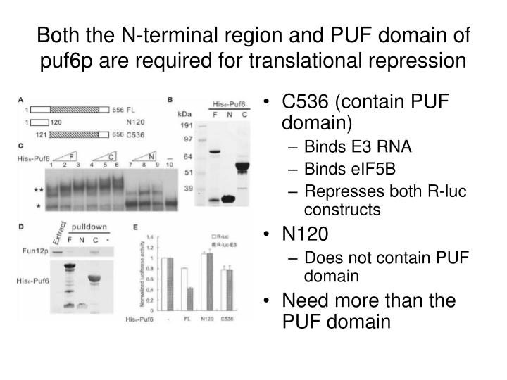Both the N-terminal region and PUF domain of puf6p are required for translational repression
