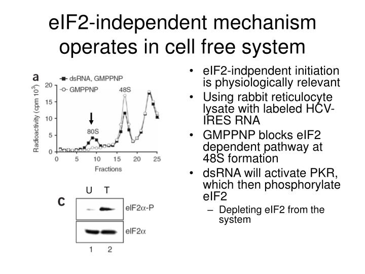 eIF2-independent mechanism operates in cell free system