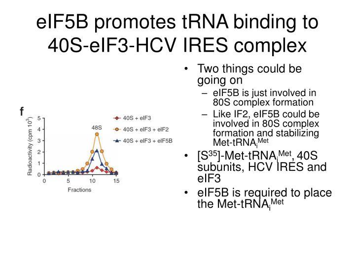 eIF5B promotes tRNA binding to 40S-eIF3-HCV IRES complex
