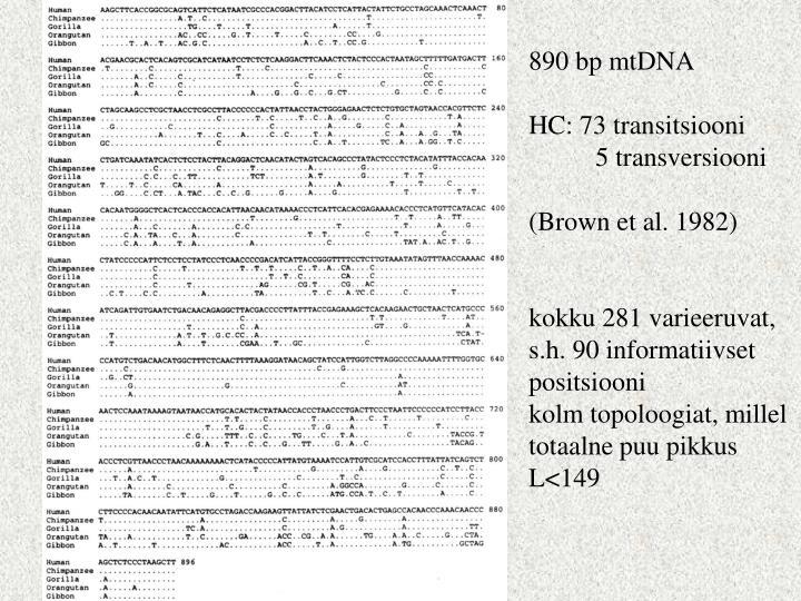890 bp mtDNA