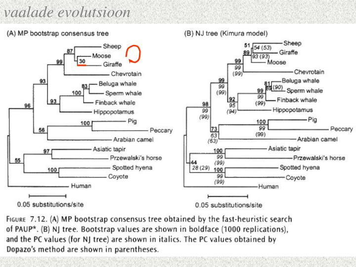 vaalade evolutsioon