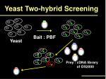yeast two hybrid screening