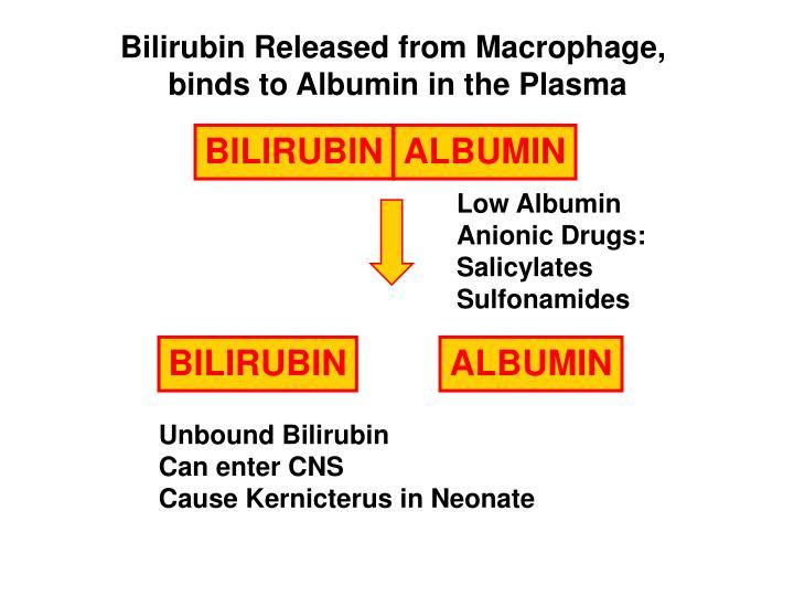 Bilirubin Released from Macrophage,