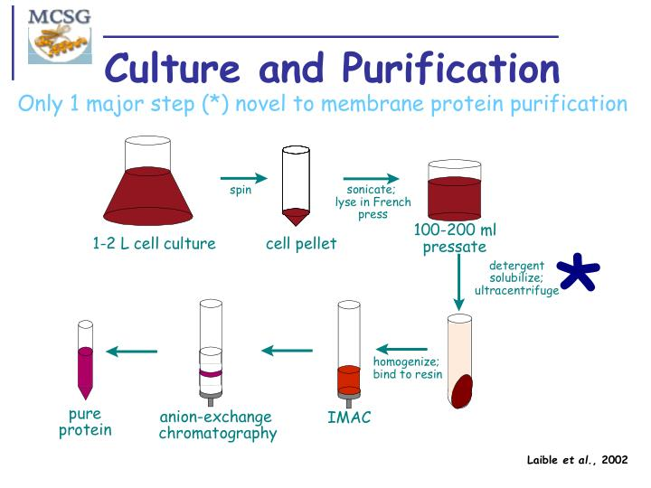 Culture and Purification