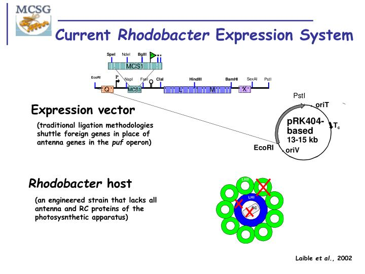 Current rhodobacter expression system