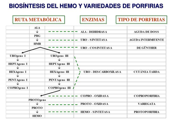 BIOSÍNTESIS DEL HEMO Y VARIEDADES DE PORFIRIAS