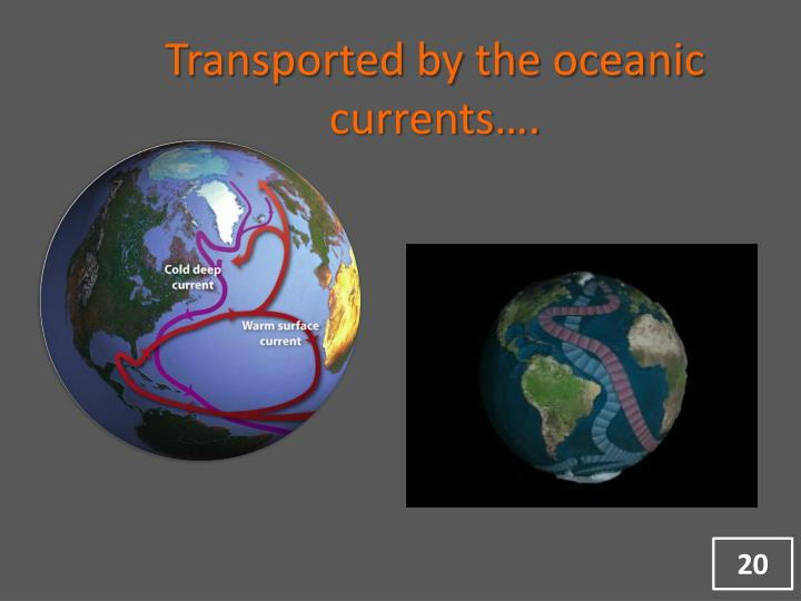 Transported by the oceanic currents….