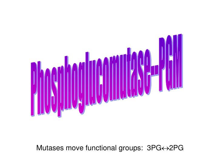 Phosphoglucomutase--PGM