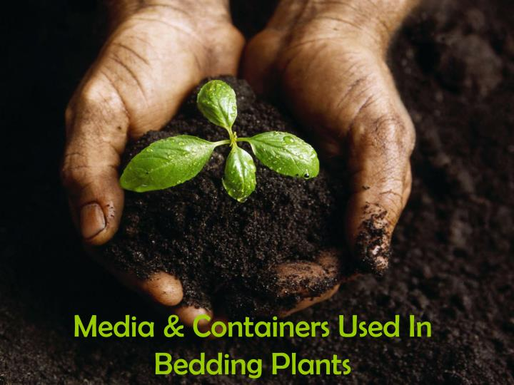 media containers used in bedding plants n.