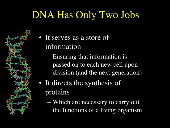 Dna has only two jobs