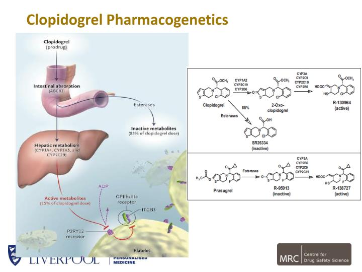 Clopidogrel Pharmacogenetics