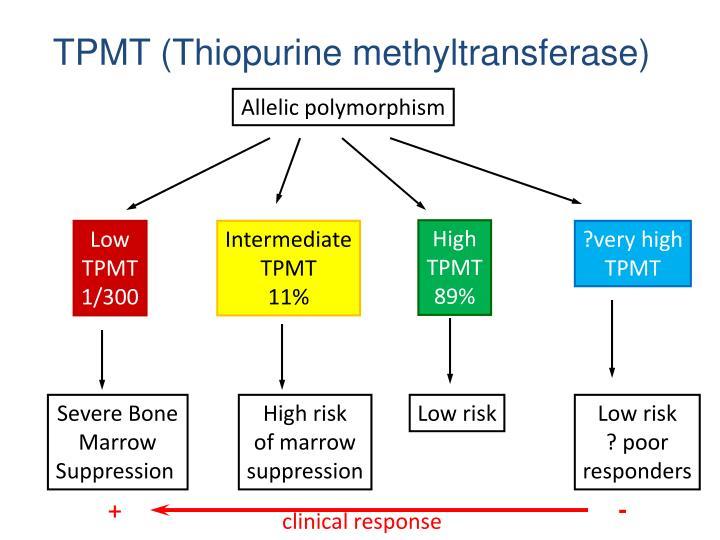 TPMT (Thiopurine methyltransferase)