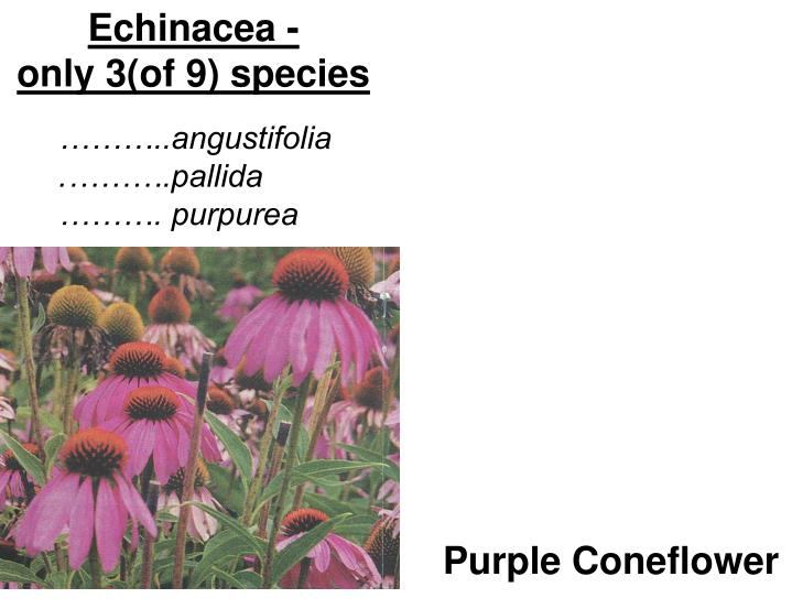 Echinacea -                             only 3(of 9) species
