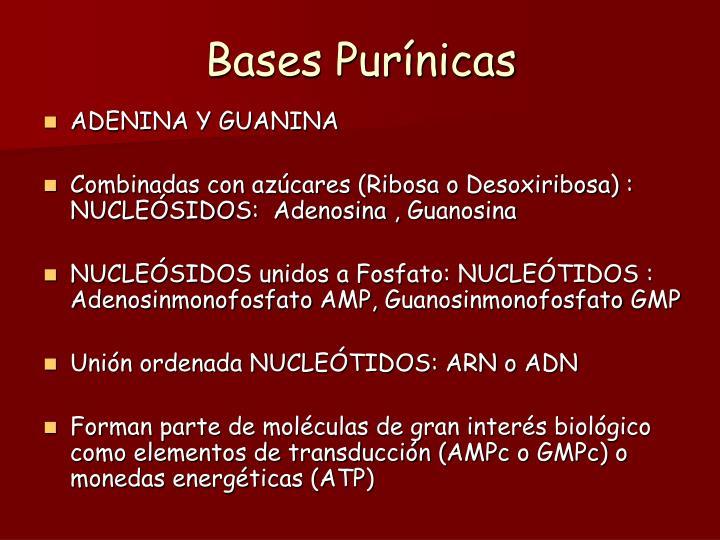 Bases Purínicas