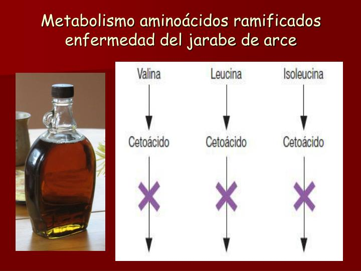 Metabolismo aminoácidos ramificados
