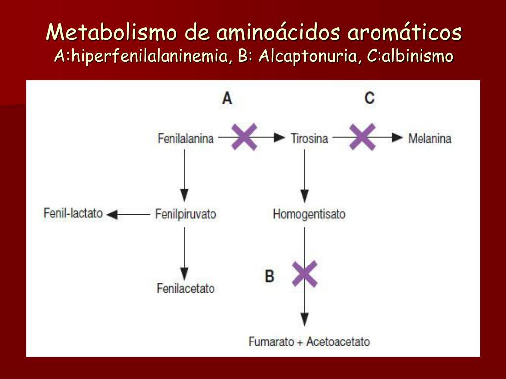Ocho formas sorprendentemente efectivas para Tipos de metabolismo