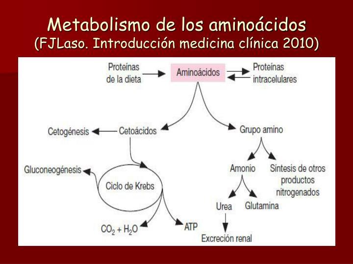 Metabolismo de los amino cidos fjlaso introducci n medicina cl nica 2010