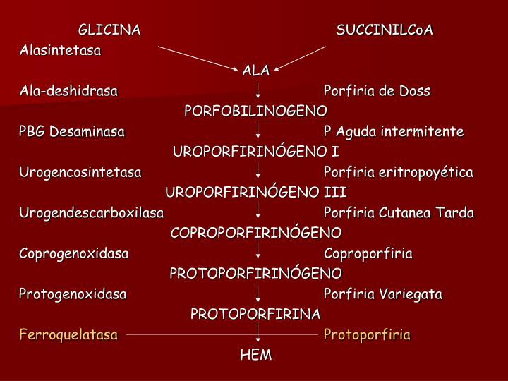 GLICINA                                              SUCCINILCoA