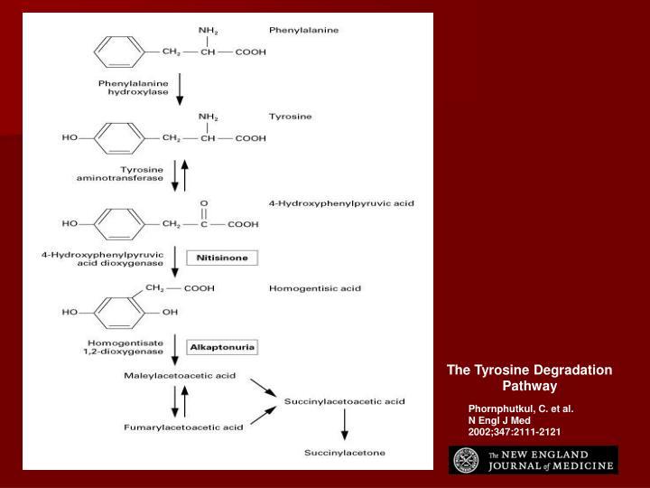 The Tyrosine Degradation Pathway