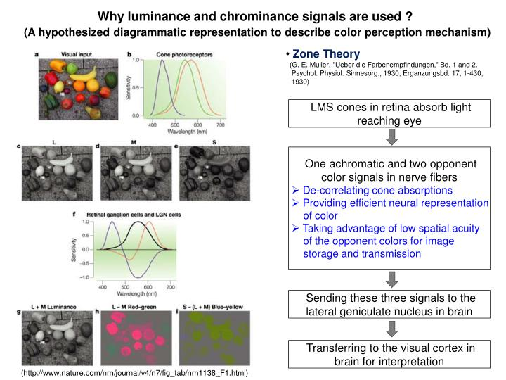 Why luminance and chrominance signals are used ?