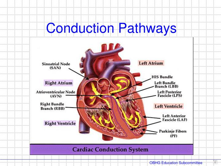 Conduction Pathways