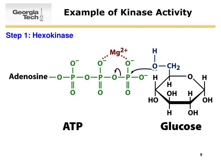 Example of Kinase Activity