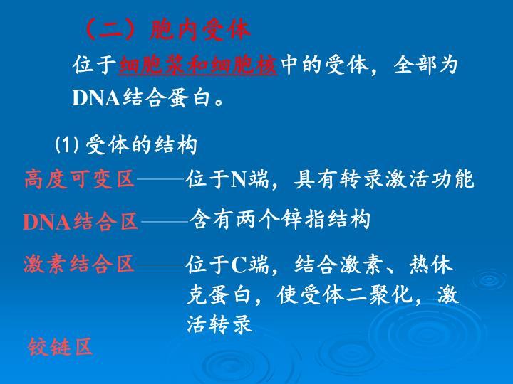 (二)胞内受体