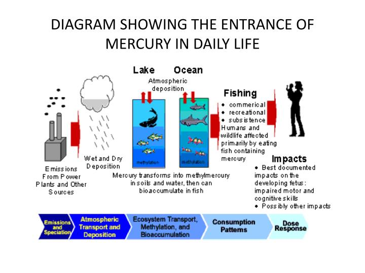 DIAGRAM SHOWING THE ENTRANCE OF MERCURY IN DAILY LIFE
