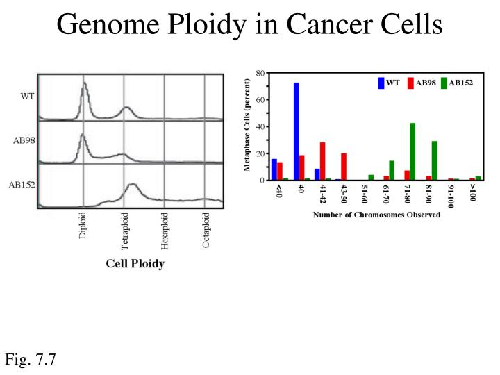 Genome Ploidy in Cancer Cells