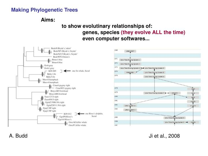 Making Phylogenetic Trees