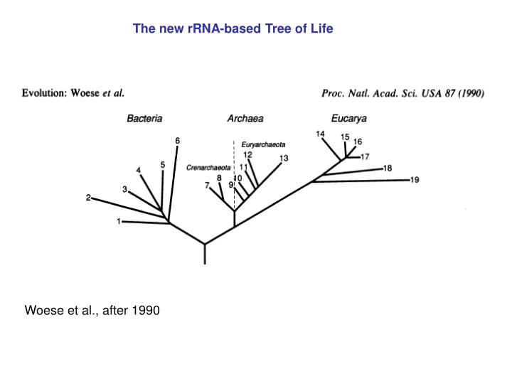 The new rRNA-based Tree of Life