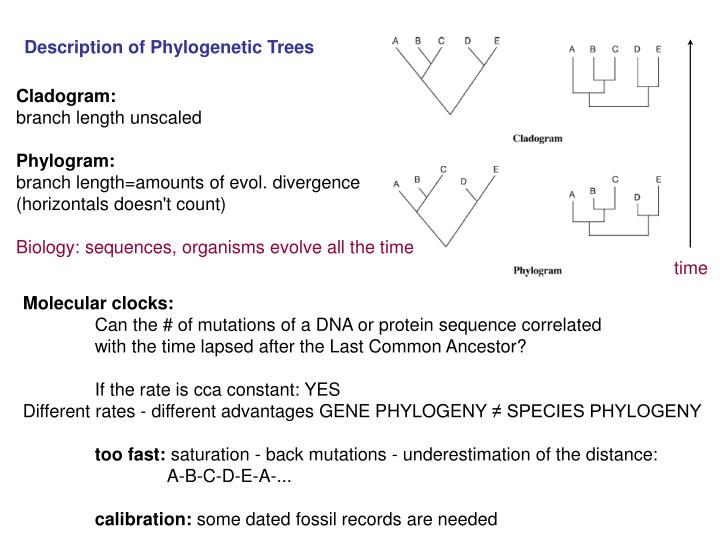 Description of Phylogenetic Trees