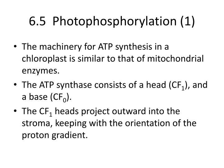 6.5  Photophosphorylation (1)