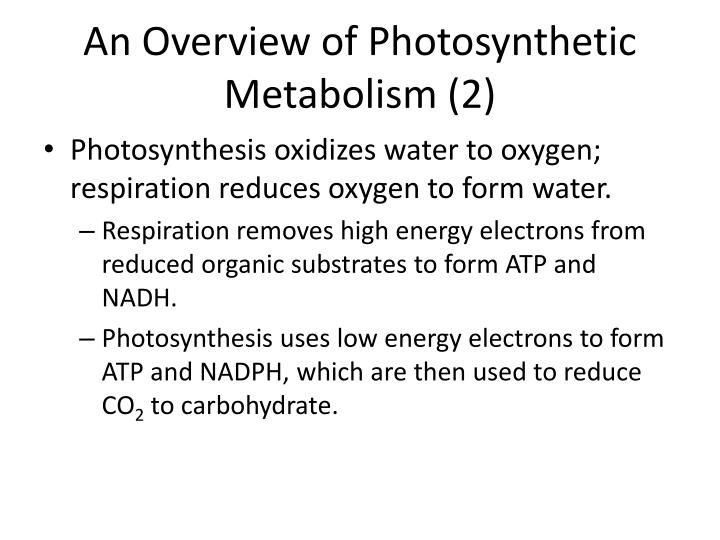 An Overview of Photosynthetic Metabolism (2)