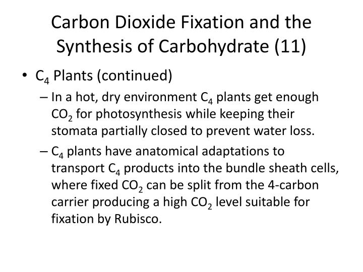 Carbon Dioxide Fixation and the Synthesis of Carbohydrate (11)