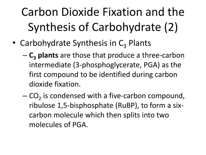 Carbon Dioxide Fixation and the Synthesis of Carbohydrate (2)
