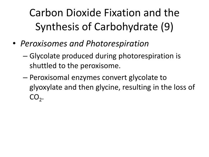 Carbon Dioxide Fixation and the Synthesis of Carbohydrate (9)