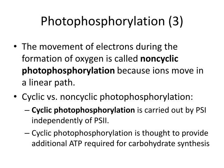 Photophosphorylation (3)